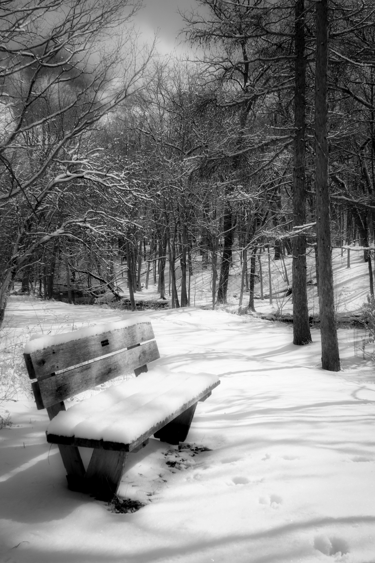 A Bench With aView