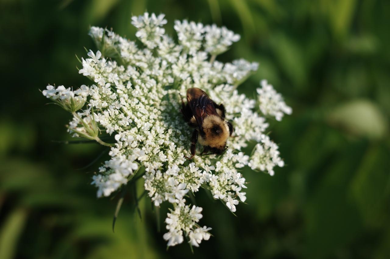 Pollen, Our Bane and SavingGrace
